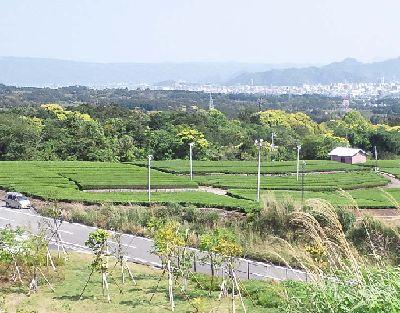 沼津ネオパーサから見えるお茶畑の景色