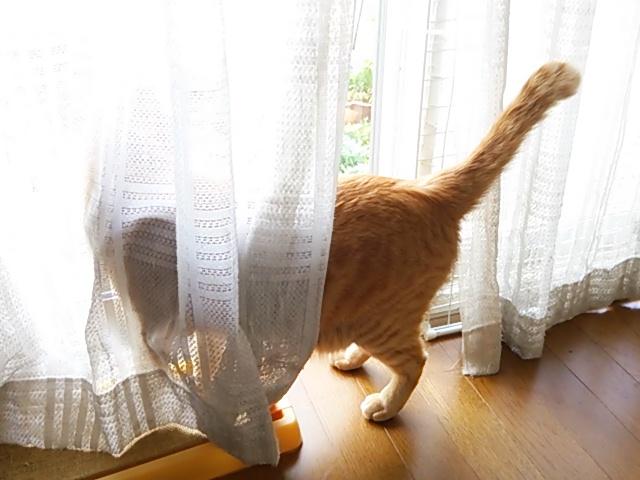 猫とカーテン