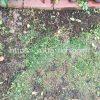 【画像付き】除草剤を始めて使ってみた!使用前後の草のようす